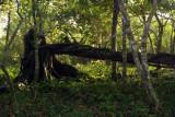 207 DSC_5075 Bocas_12_2007.JPG