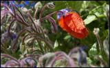 In Nolde's Garden
