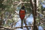 Arizona Birds-2006