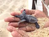 Turtlefant.jpg