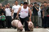 hog-handler-O.jpg
