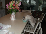 9.  Breakfast at the old shore house.  I do like flowers on the table.