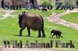 San Diego Zoo Wild Animal Park, March 2010