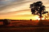 A Harvest Sunset