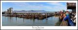 Pier 39 Sea Lions.jpg