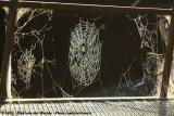 Spider Web in Autumn Dawn