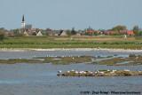 The Tern en Gull colony in the Petten