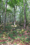 Just a hillside forest
