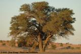 Tree in the last sunlight