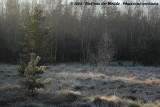 Early morning forest-frost