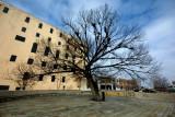 Tree that survuved the Oklahoma City Bombing Memorial