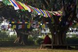 Studying monk, Lumbini