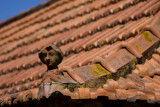 Roof in Caniço de Baixo