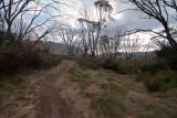 Path in the Australian Alps, Kosciuszko National Park