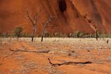 Dead Trees, Uluru