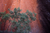 Contrasts, Ayers Rock (Uluru)