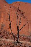 Tree, The Olgas