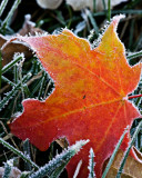 October 2008 - Frost Around The Edges - Dale Edsen