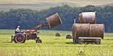 September 2008 - Harvesting The Hay - Carolyn Fox