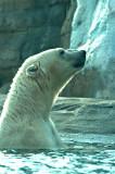 Nikita at the KC Zoo