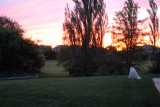 Abby enjoying the setting sun
