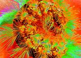Psychedelic Caterpillar
