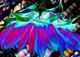 EXP FLOWER DSC01144.tif