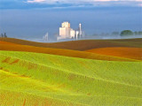 IN THE PALOUSE