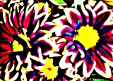 Sherri's Abstract Flowers