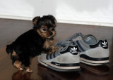 Ivy checks out Tim's sneaks