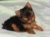 Little Chloe