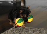 Chloe with toy