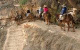 Grand Canyon - Mule Train