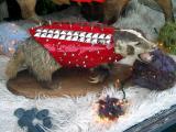 badger! badger! badger