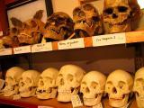 skulls! skulls! skulls!