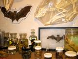 bats and things in jars