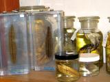 leeches and jarred yuckies