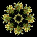White-yellow Wild Flower