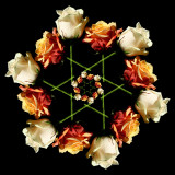 Roses and a green star