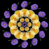 Solanum and Roses