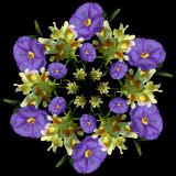 Solanum and wild flower