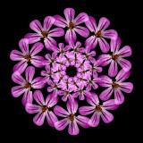 A wild Flower frrom the Dark Forest