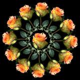 Special Rose Bouquet