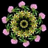 Beauty of Wild Flowers