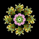 Arranged Wild Flowers