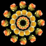 Three rings of Roses
