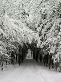 My little forest in winter