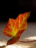 Leaf on the carpet