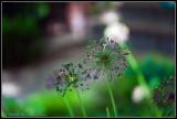 WEB_P1080009.jpg