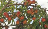 07-fruit or vegetable - GR